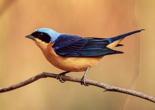 Campos do Jordão (SP): um destino incrível para Bird Watching (observação de aves)