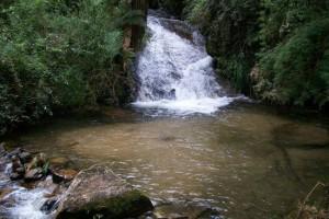 horto-florestal (1)