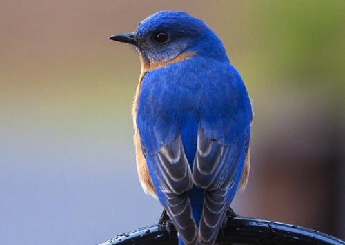 Birdwatching: já sabe o que é e como relaxar com ele?