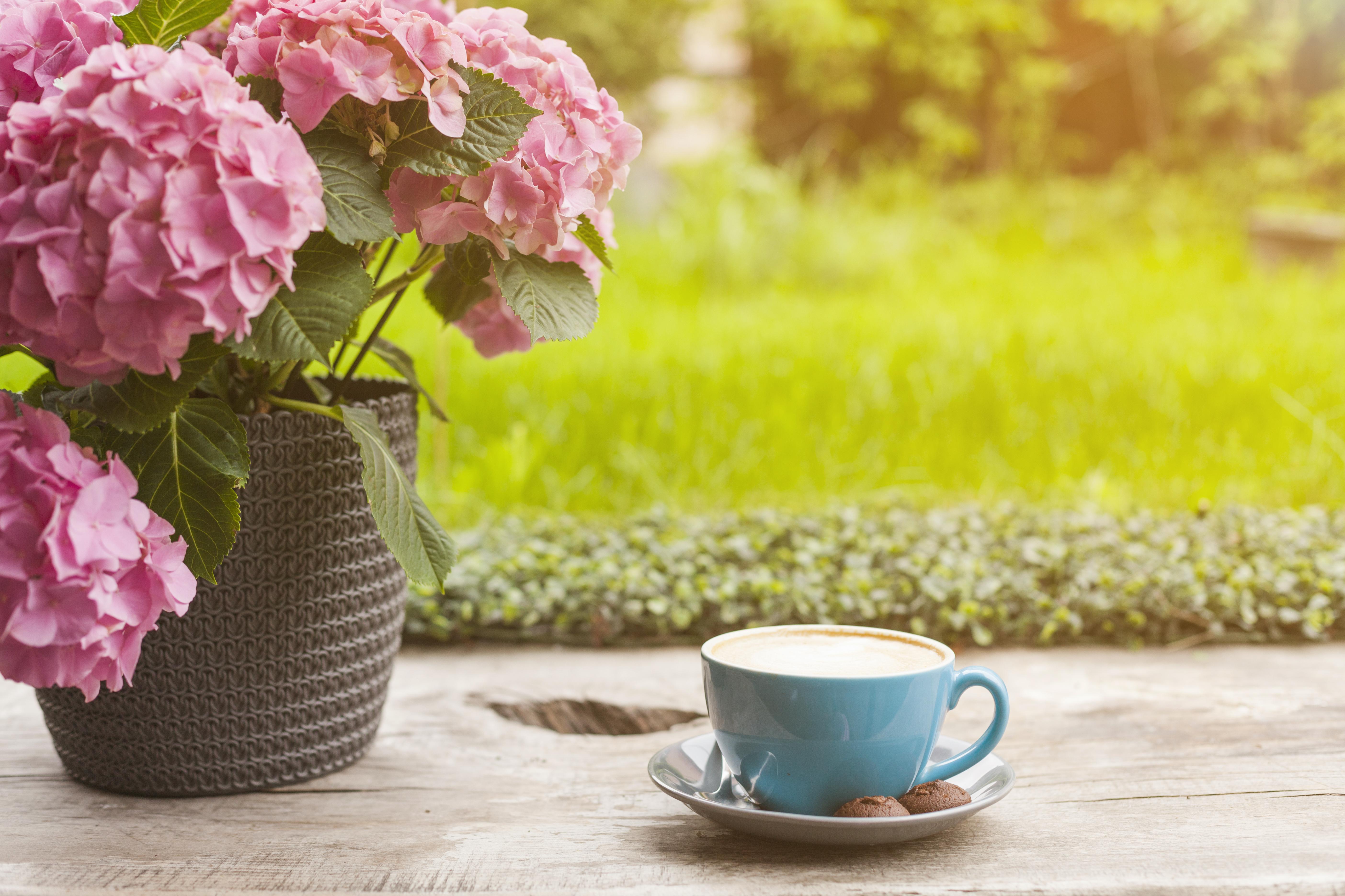 Xícara De Café E Flores Em Meio A Jardim